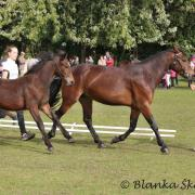 Cashel Hill Lass and Diamondczech Cashel Lady